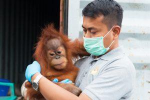 Bpk Panut with Orangutan